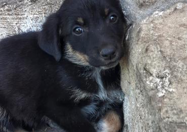 Отдам щенка в хорошие руки