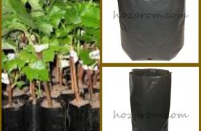 Пакеты для саженцев Выращивание растений Выращивание хвойных растений